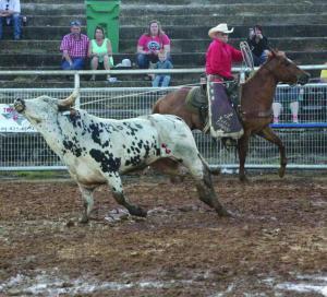 Ole Cowhand